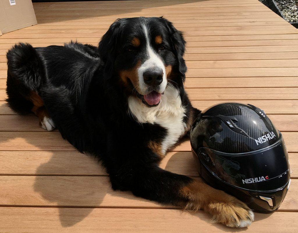 A peine arrivé à la rédaction et adopté par les pilotes qui ont du chien !